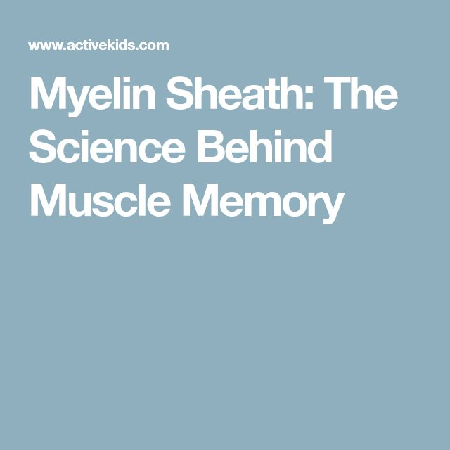 Myelin Sheath: The Science Behind Muscle Memory