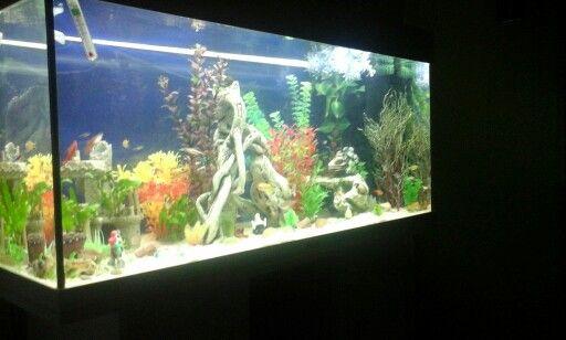 New set up in my new juwel 180 gallon aquarium