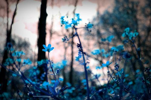 blue tumblr photography - Google Search | Photos ...