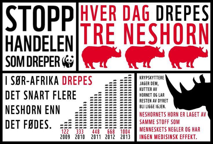 Hver dag drepes tre neshorn av krypskyttere som bare vil ta hornet. Stopp handelen som dreper!  #rhino #Infographic #WWF