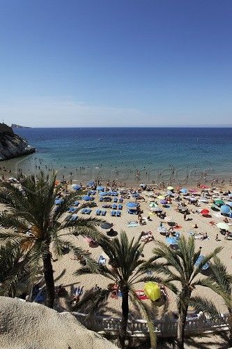 Palm beach with a sea view, Beach life, Costa Blanca, Benidorm, Province Alicante, Spain