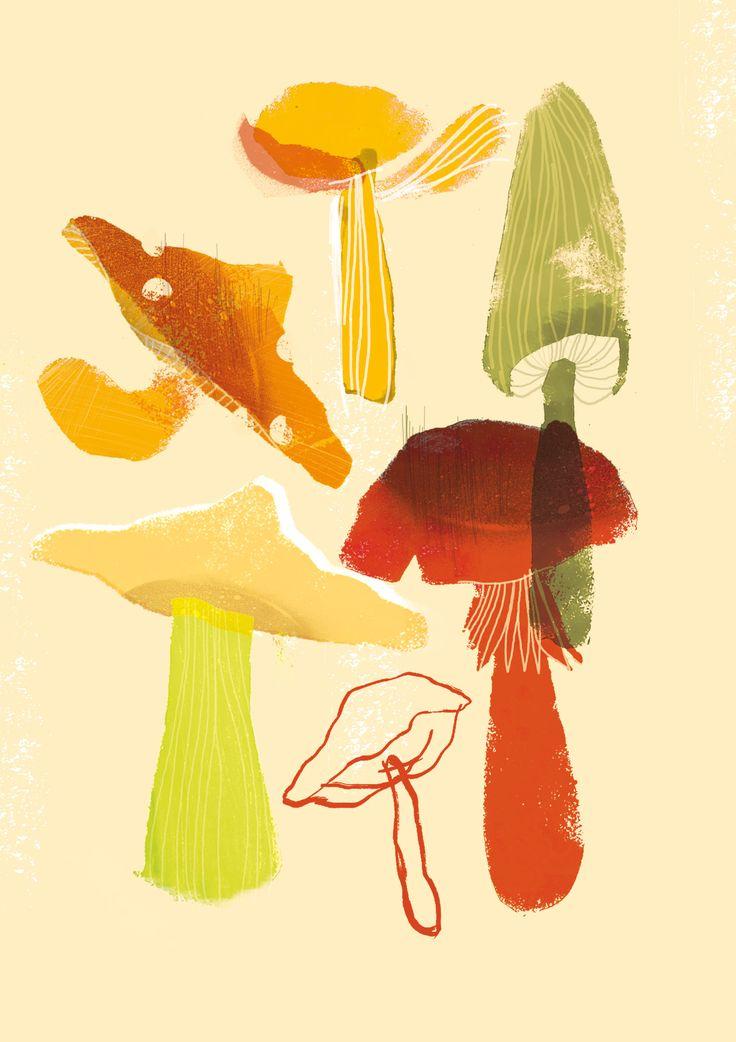 Mushrooms illustration Paulina Derecka