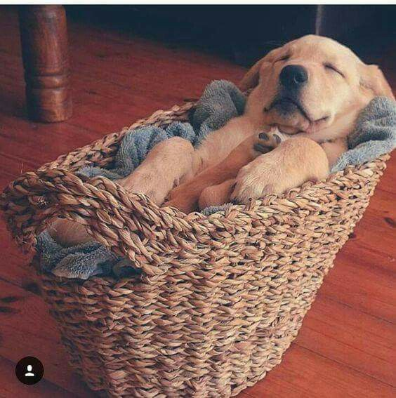He couldn't find his bed, but thankfully the basket was relaxing.