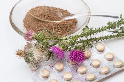 Milk Thistle Herbal Medicine