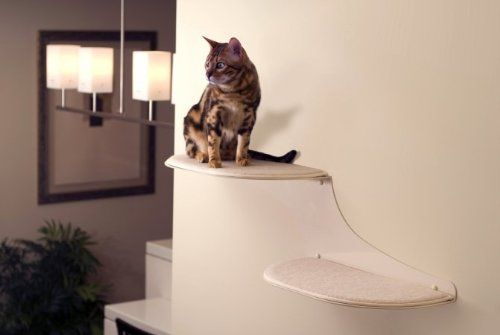 These have become all the rage lately, as more people in small spaces get cats and want something more attractive and space-saving than traditional cat trees. You can buy or make them yourself and really the only limit is the length of your wall and the height of your ceiling.