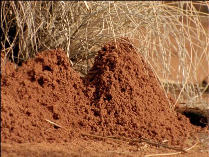 http://footage.framepool.com/shotimg/qf/969879496-anthill-namibia-sand-grass.jpg