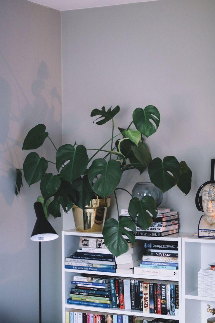 Gröna växter och grå väggar | joannafingal Blogg