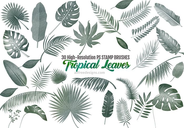 30 Tropical Leaves Brushes For Summer Designs In 2019