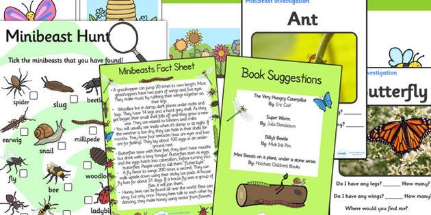 Minibeasts Discovery Sack