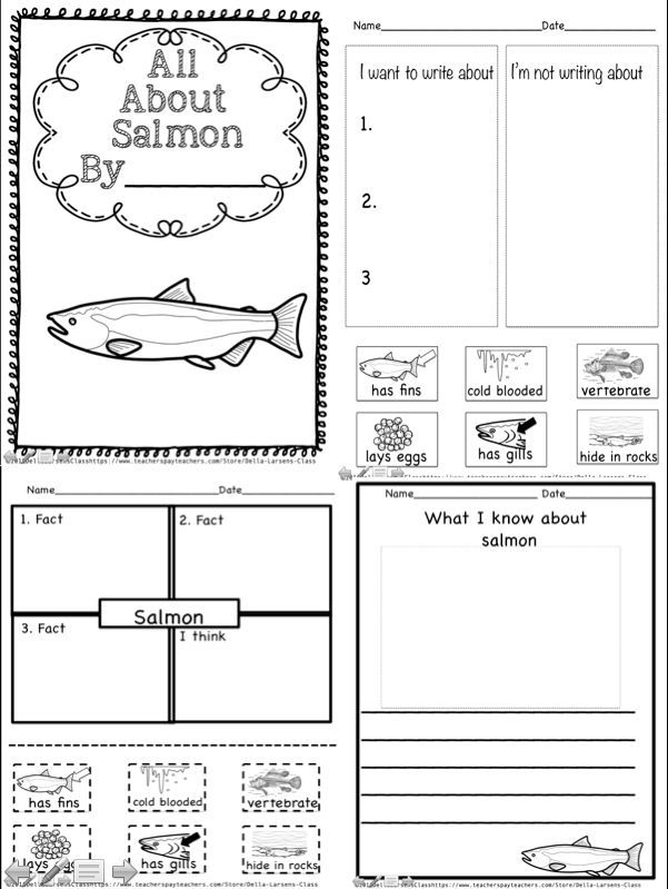 The 4 square writing is a fantastic technique used to teach writing and organizational skills through a graphic organizer. Salmon! Focus on K2 salmon writing product. This product walks you through the 4 square writing technique. Easy to follow directions prompt you through 5 easy steps.