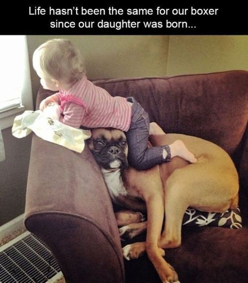 Funny Baby Pictures with Captions | ... boxer loldogs n cute puppies funny dog pictures cheezburger wallpaper