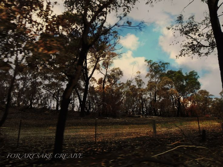 7 best images about photography bushfires adelaide for Landscapers adelaide south