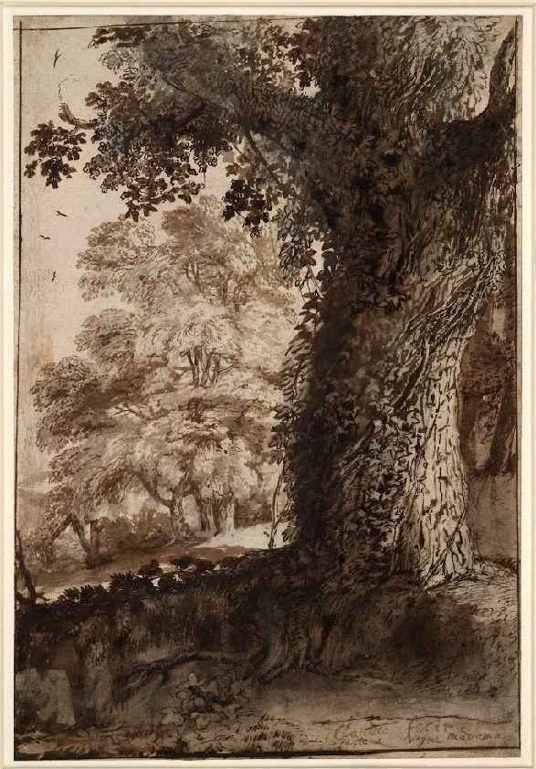 Claude Gellée, dit le Lorrain (Fr. 1600 ou 1604/1605 – 1682), Étude d'arbre, 1638, encre sur papier, London, British Museum