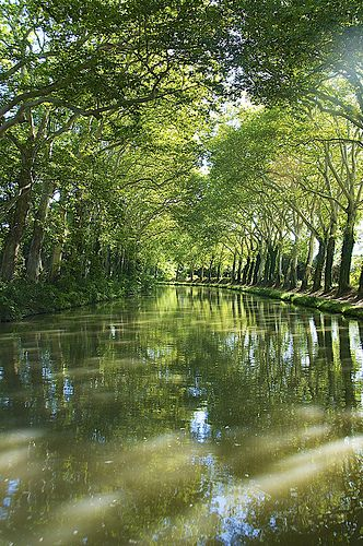 Midi Canal shaded by plane trees, Aude, Languedoc-Roussillon, France