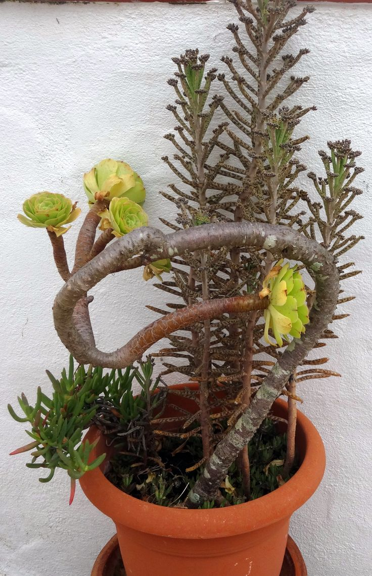 Succulents are so rewarding!