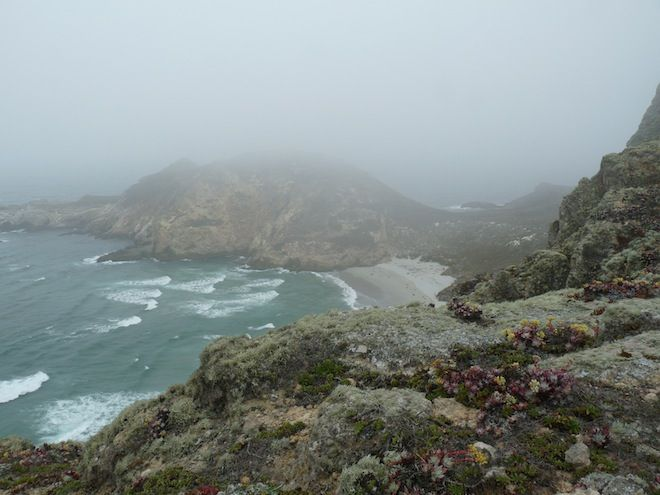 San Miguel Island: Home to Amazing Animals, Weird Plants, and Spooky Remnants of an Ancient Forest