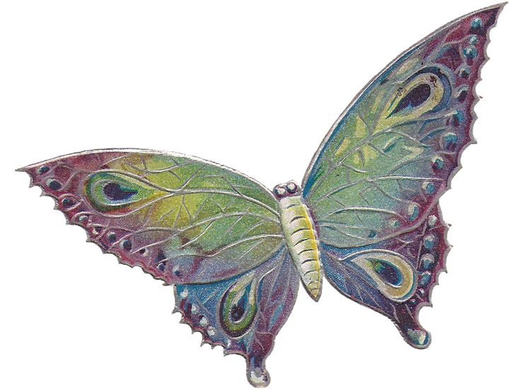 Free: Butterfly