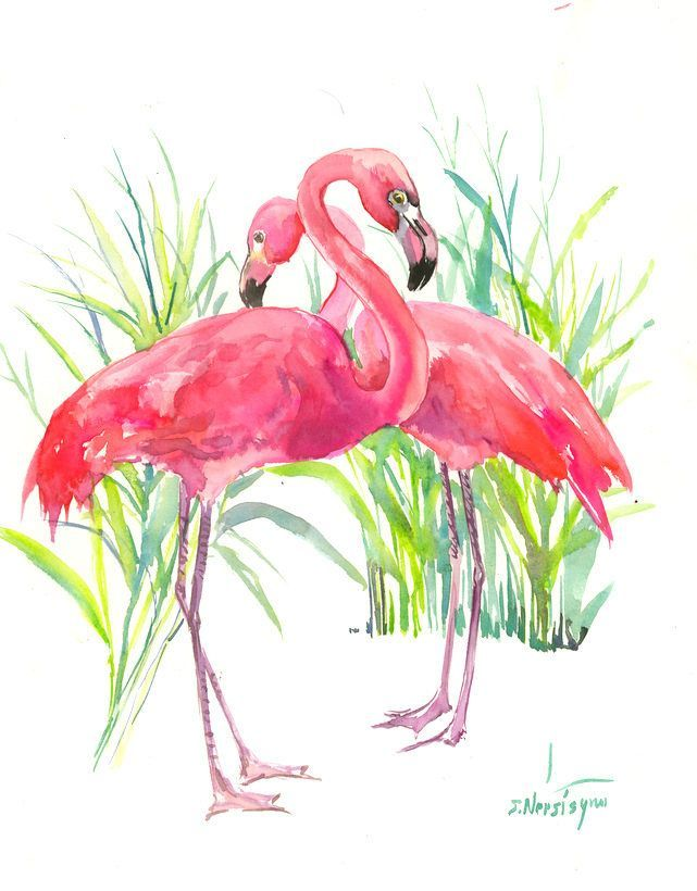 Illustration De Flamant Rose Flamant Rose Aquarelle De Flamant