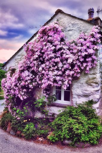 Pink Clematis - love the look and placement