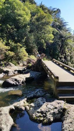 Photo of Kaiate Falls - supposed to be one of the nicest walks around Tauranga