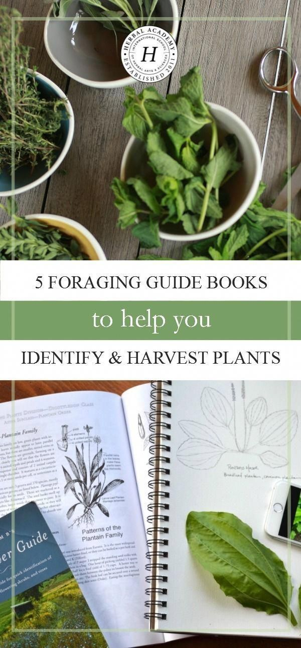 5 Foraging Guide Books To Help You Identify Harvest Plants Foraging Guide Herbalism Foraging