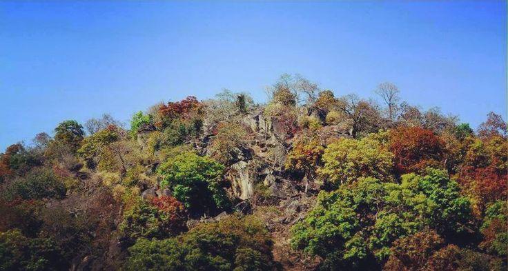 Baresadh Forest #latehar #incredibleindia