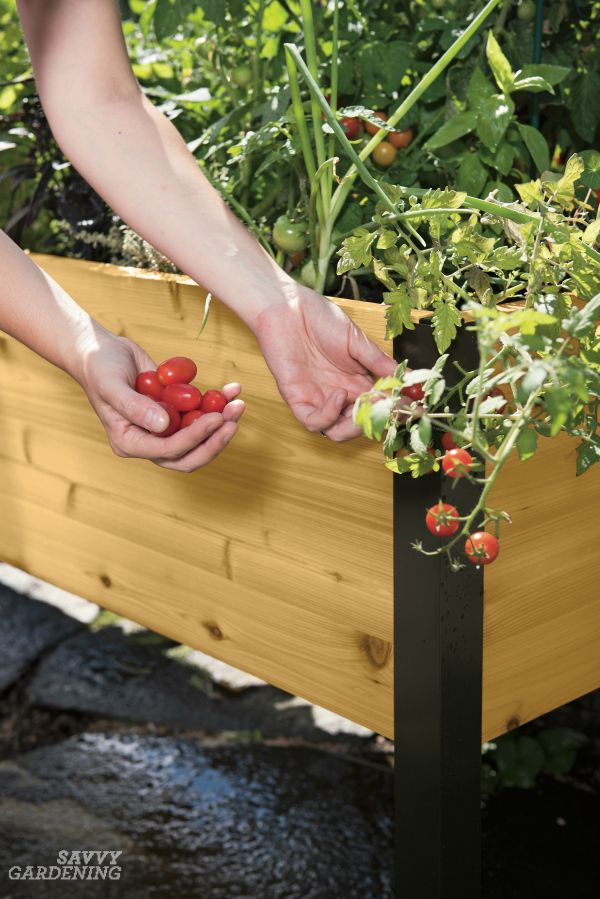 Elevated Raised Bed Gardening The Easiest Way To Grow Vegetable Garden Raised Beds Growing Tomatoes In Containers Raised Garden Beds