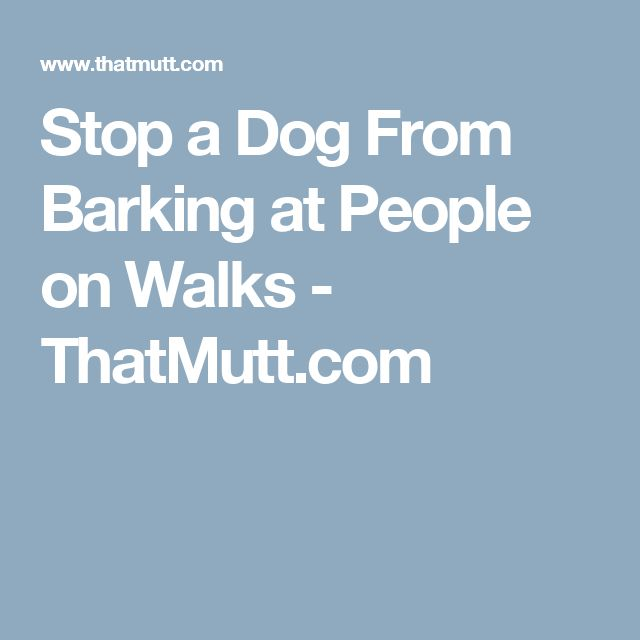how to stop my dog from barking at people