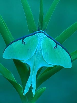 How light & soft she dresses for spring, such gauzy raiment softly folded over her lovely shape.  Luna. Moth.