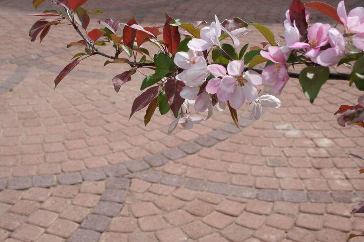 Viuhkan kauneutta. - Beauty of garden stones.