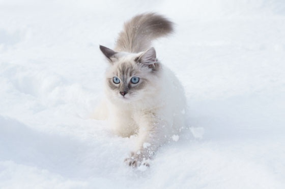Karmy bez kurczaka dla kotów:  http://kakadu.pl/Karmy-dla-kotow/karmy-bez-kurczaka-dla-kotow.html