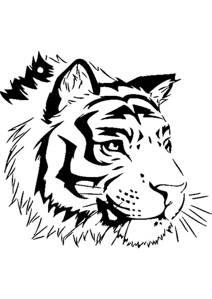 Best 25 coloriage tigre ideas on pinterest - Coloriage tigre ...