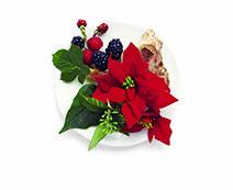 """""""Kukkia"""" Joulutähti & myski Hauskaa joulunaikaa! Punaisen joulutähden ja lämpimän myskin yhdistelmä, joka virkistää mielen."""