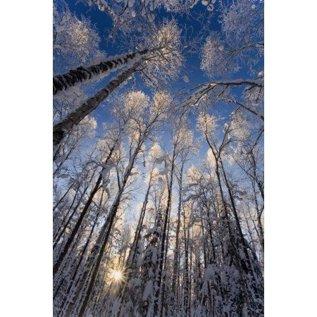 Overhead View Of Snow Laden Forest Far North Bicentennial Park Anchorage Alaska Winter Canvas Art