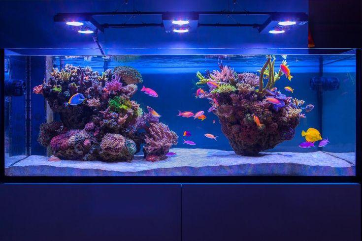 Reef Spotlight: Chris' Algae Farm (ELOS 160)