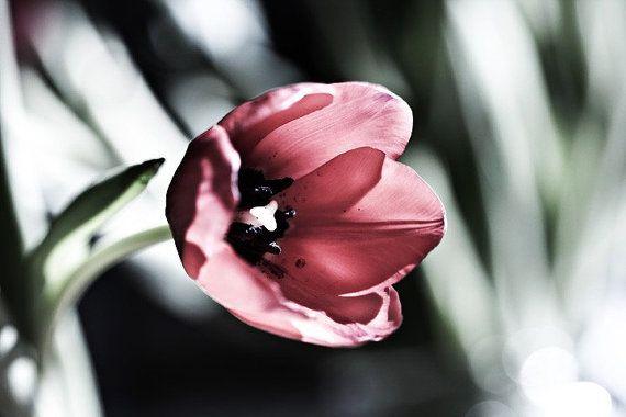 Tulip - 5x7 Fine Art Print