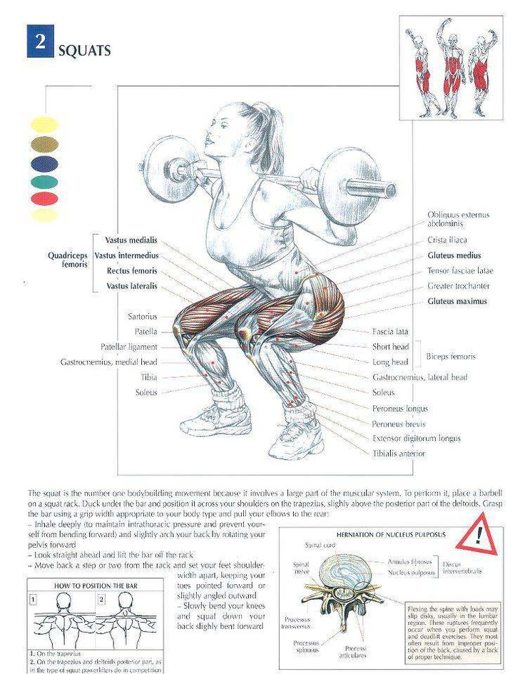 #Squat Michele the Trainer 8774091758 www