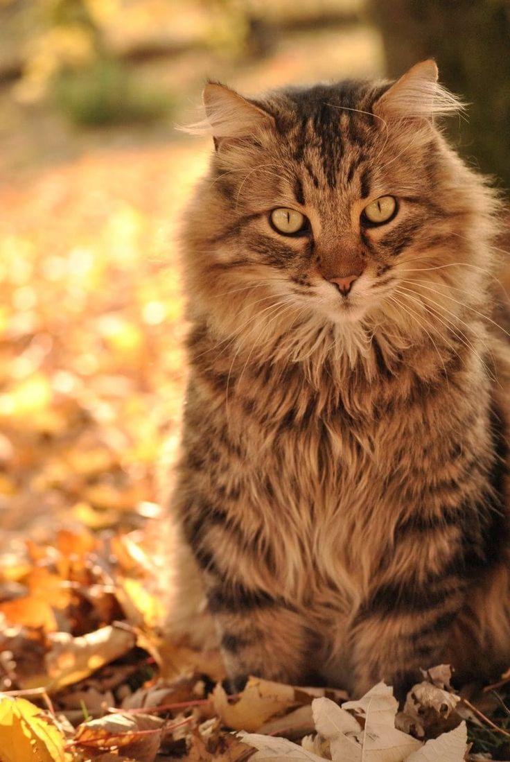 猫と秋の画像 05|ねこLatte+