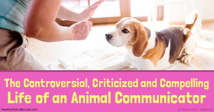 Animal communication can be especially beneficial. Meet Jen Ortman, an animal communicator who knows that animals have their own language, and could hear them. http://healthypets.mercola.com/sites/healthypets/archive/2016/11/13/animal-communicator.aspx