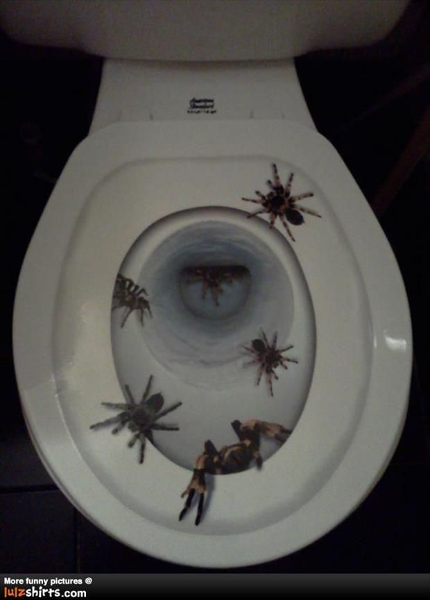 17 Best Images About Nope Nope Nope On Pinterest