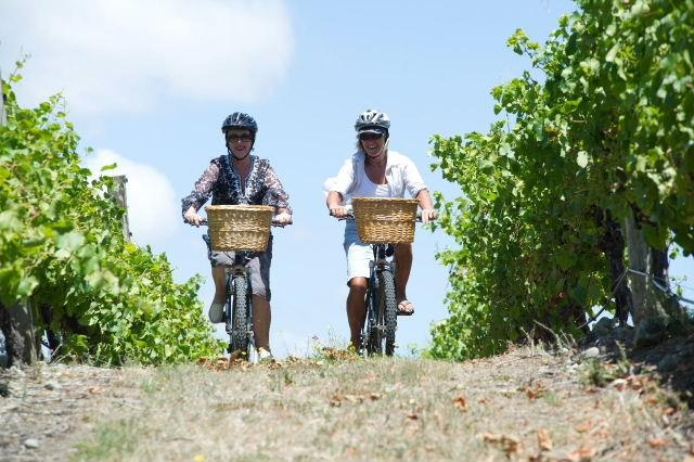 Cycling Martinborough Vineyards at the bottom of the North Island of #NewZealand.