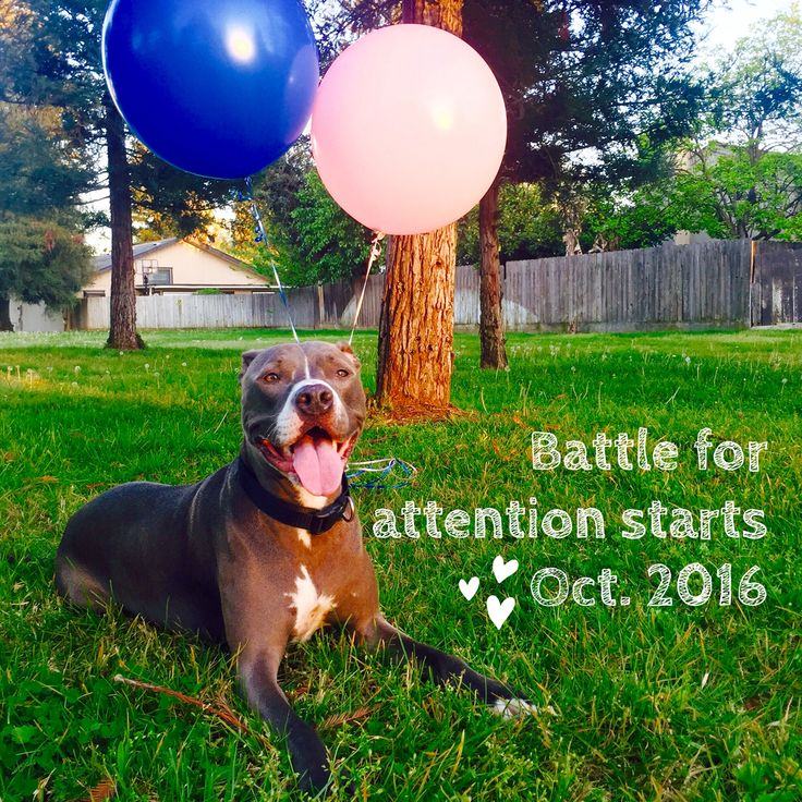 Pregnancy Announcement with our family dog!