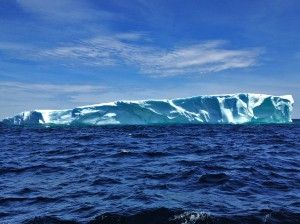 Iceberg Quest Ocean Tours - Twillingate Whalewatching, puffins, etc.