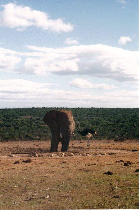 Hluhluwe-Umfolozi Game Reserve, Kwa Zulu Natal, South Africa