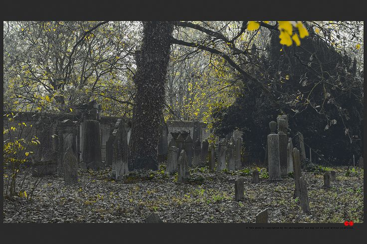 https://flic.kr/p/BnV8o7 | Autumn at the Jewish cemetery in Ferrara | © This photo is copyrighted by the photographer and may not be used without permission.