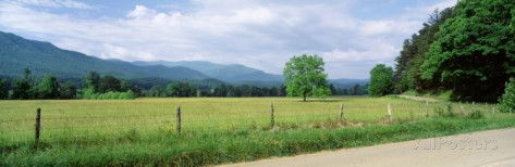 Road Along a Grass Field, Cades Cove, Great Smoky Mountains National Park, Tennessee, USA Photographic Print by Panoramic Images - at AllPosters.com.au