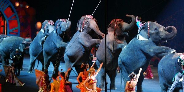 New Jersey Is First State To Ban Wild Animal Circus Acts Animals Wild Animals Matter Circus Animals