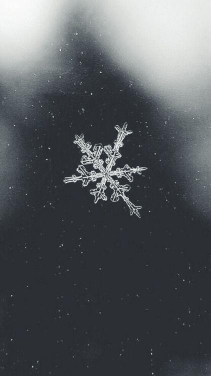 Ein wunderschönes Bild, frost kann auch schön sein | www.lavita.de