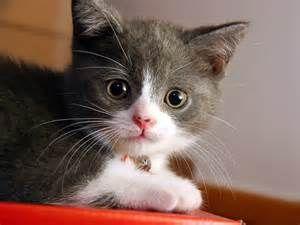 gatos de estimação - Resultados Yahoo Search Results Yahoo Search da busca de imagens