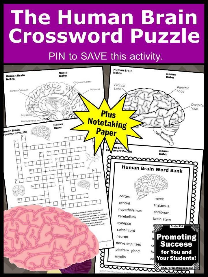Science teachers will download a printable crossword puzzle worksheet for students to practice the human brain vocabulary. It is a fun supplement to a body systems unit study for upper elementary (4th, 5th, 6th, 7th grade and middle school.It works well in science centers or stations as a review, test prep, formative assessment or extra practice for kids with special education learning needs.